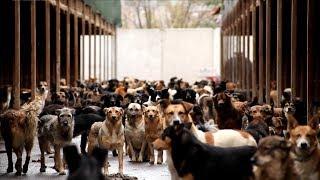 """""""Каждая собака"""" - документальный фильм о приютских собаках"""