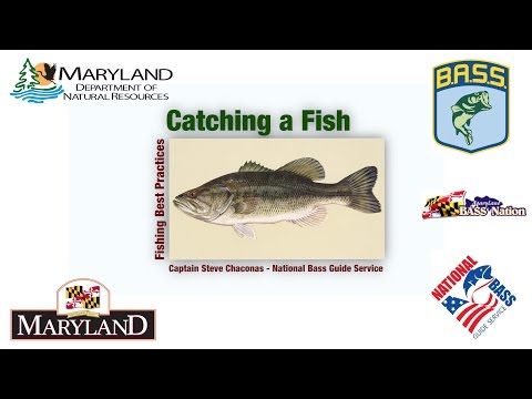 Fishing Best Practices  - Catching A Fish - Maryland Department Of Natural Resources