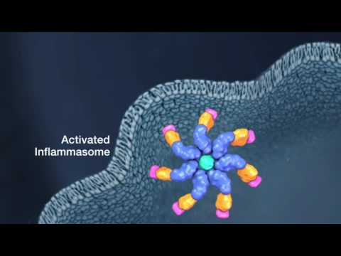 Simple and Specific Detection of Inflammasome Activity