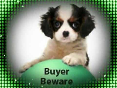 NEWPORT BEACH Council Demands Torture Tax -Horrific Puppy Mill Death Man's Best Friend -Fraud