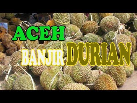 Panen Besar Durian Tangse 2017,Nikmatnya makan duren pake lemang