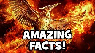 20 Amazing Facts About The Hunger Games Mockingjay
