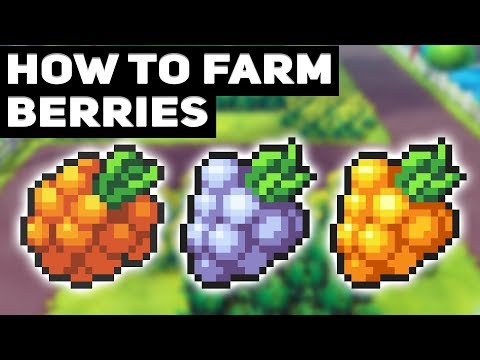 How To Farm Unlimited Berries In Pokémon Let's Go Pikachu / Eevee! (Golden Razz Berry Farming Guide)