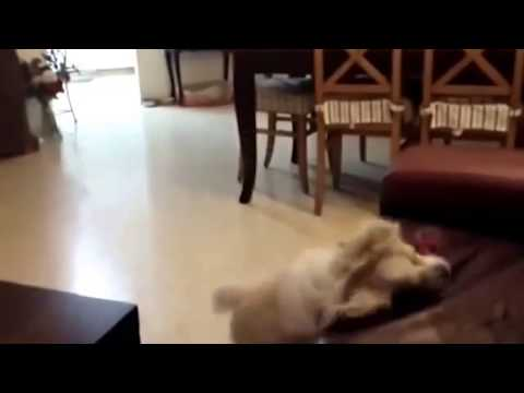 Epic Dog Fails Compilation