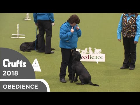 Obreedience - Lively Labs | Crufts 2018