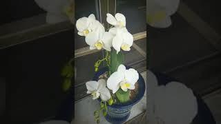 우리집 자연 꽃정원