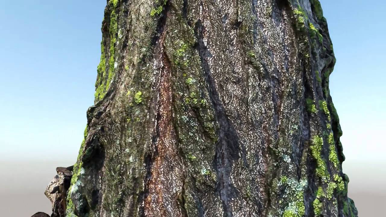 3D Scan - Tree trunk