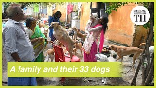 This Andhra family takes care of 33 dogs