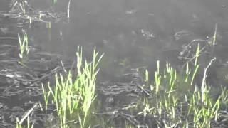 видео: нерест щуки в мае рыбалка удачная город курск браконьеры