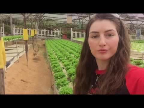 CAMERON HIGHLANDS, MALAYSIA: Strawberry Farm & Bee Farm