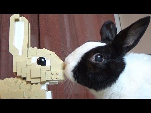 Rabbit Reviews Lego Rabbit!