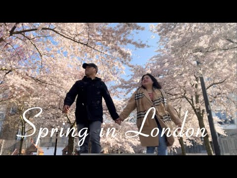 London's Cherry Blossom in Swiss Cottage
