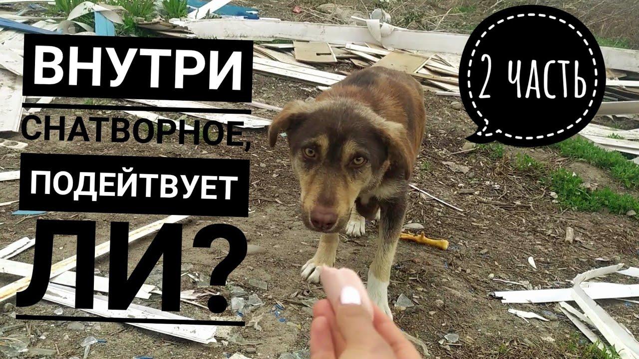 2 часть. Удалось ли поймать маму щенят, которые были в опасности😰 Увидят ли они еще раз маму?😭