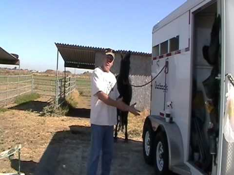 Giving Horse Pressure while a Horse is Tied- Part 1- Big Butts & Spurs - Rick Gore Horsemanship