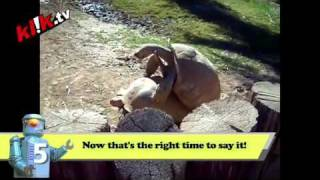 Top 10 Viral Videos - 12th August 2010