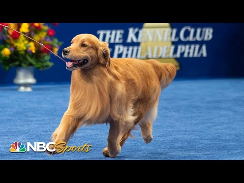 National Dog Show 2019: Best in Show (Full Judging) | NBC Sports