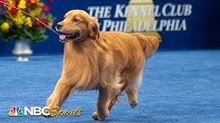 National Dog Show 2019: Best in Show (Full Judging)   NBC Sports