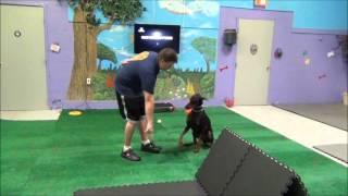 Dog Training Miami, Advance Obedience Diesel K9 Training Academy Resort