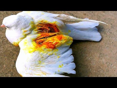 Кошка снова напала на голубей/The cat attacked pigeons again