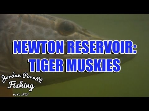Newton Reservoir: Tiger Muskies