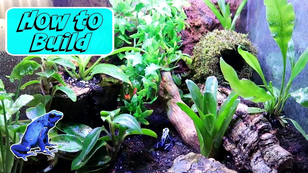 How To Build A Dart Frog Vivarium Youtube