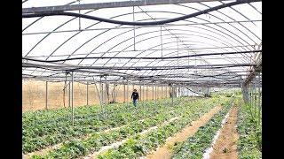 Crece la superficie de agricultura ecológica en Cataluña