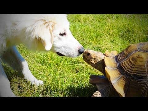 Cute Tortoise 🐢 Funny and Cute Tortoise (Full) [Funny Pets]