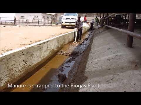 Biogas Plant At Sebore Farms
