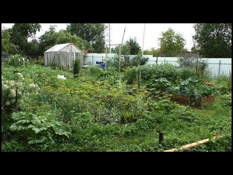 Мой огород в конце июля. Обзор участка.