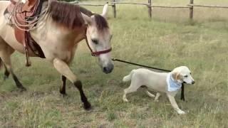 В Техасе собака научилась ездить верхом