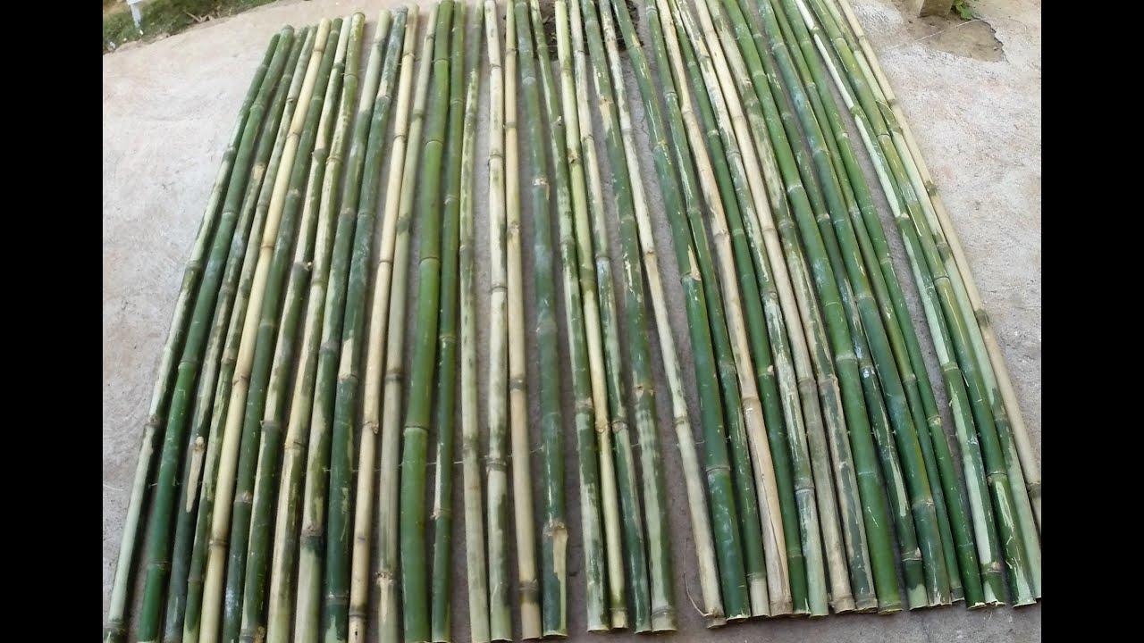 Como fazer uma cerca de bambu parte 03 youtube for Como criar caracoles de jardin