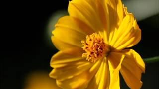 2012年秋公開の映画「祈り~サムシンググレートとの対話~」の予告...