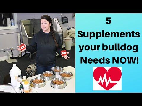 Food for an English bulldog  : MY Tips for feeding your dog  |  English Bulldog Supplements