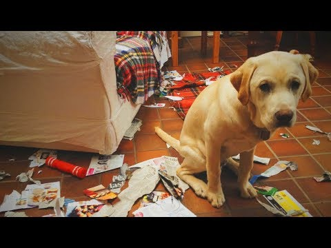 Funny Pets 🐶😂 Guilty Dogs Epic Reaction (Part 1) [Funny Pets]