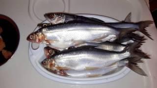 Жареный рипус(Ри́пус (лат. Coregonus albula ladogensis) — рыба семейства лососёвых: крупный подвид европейской ряпушки. Стайная рыба...., 2016-12-08T08:29:03.000Z)