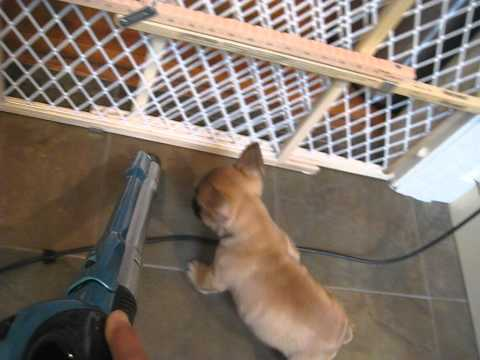 Leland vs. the vacuum cleaner (french...