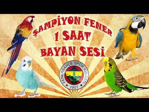 Şampiyon Fenerbahçe muhabbet kuşu ve papağan konuşturma şampiyon fener