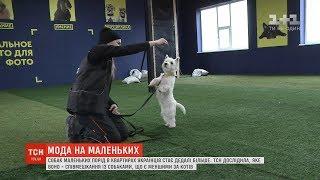 В квартирах українців стає дедалі більше собак маленьких порід
