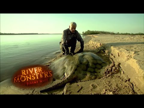 Jeremy Catches Stingray After 2 Hour Battle! | STINGRAY | River Monsters
