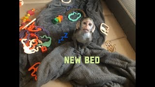 Baby monkey new bed | Max gets a new bed