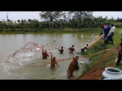 Fishing Journey Huge Fish Catching With The Fishing Net| Amazing Fishing Video