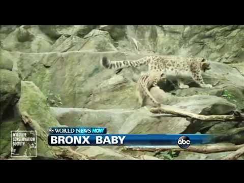 WEBCAST: Bronx Baby