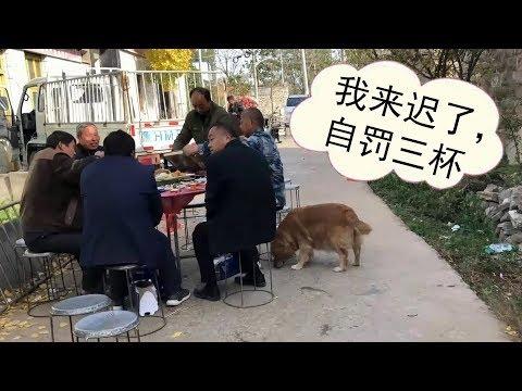 鄰居在街上大擺宴席,毛孩子聞香味趕來,狗狗:我來遲了自罰三杯【我是趙姐】
