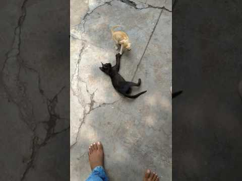 Funny cats twist moments