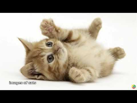 Картинки! Про котиков!