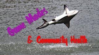 [Depth] Game Mode & Community Health