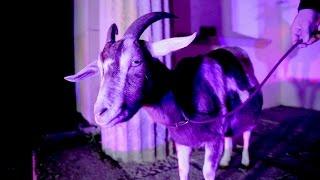 Antilopen Gang - Das Trojanische Pferd