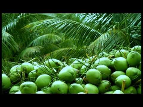 Coconut Plantation BD