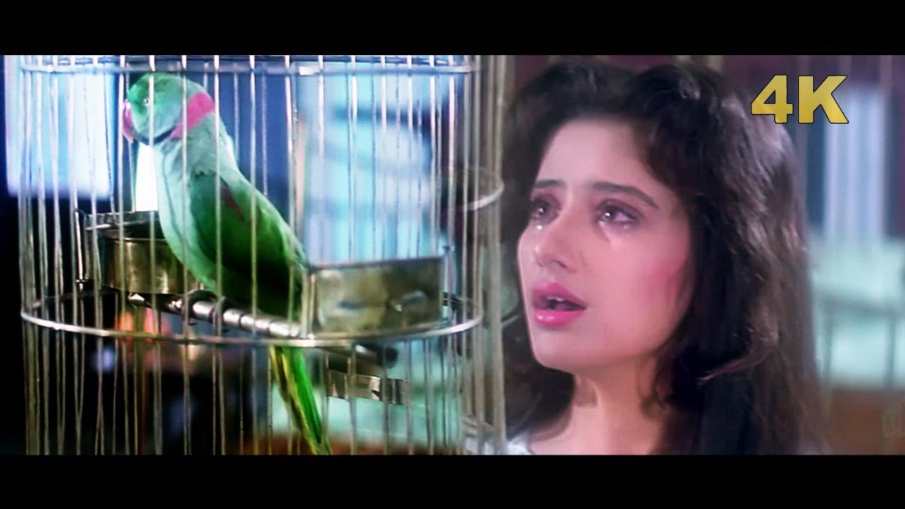 Download Tota Tota Sajan Se Kehna 4K | First Love Letter | Lata Mangeshkar | Manisha Koirala |  Hindi 4K Song