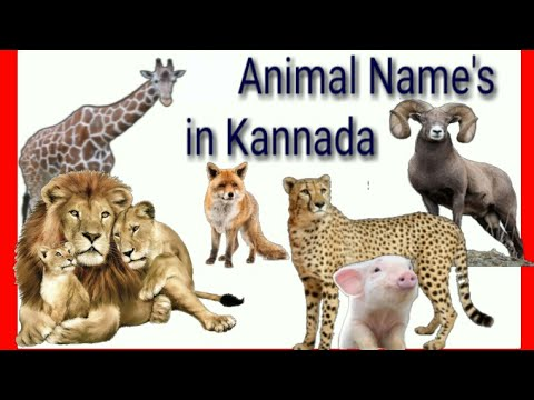 Animals in Kannada | Animals name sound in Kannada